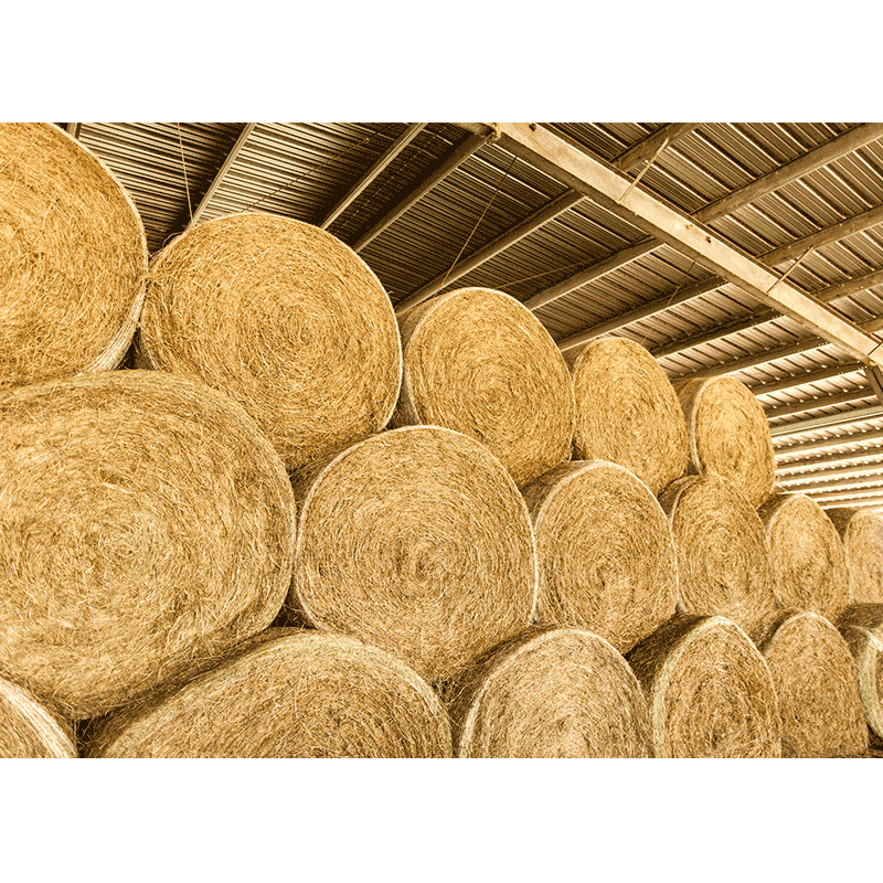 hay bale 5 6 southern cattle company